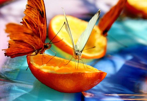 Desert Botanical Garden Phoenix Arizona Macro Photography Colorful Butterfly