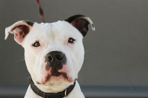 HeART Speak Artist Rescue Dog Photography
