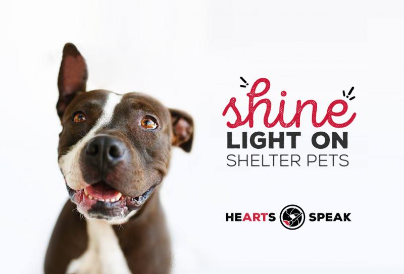 HeartsSpeak Shelter Pet Photography