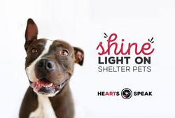 HeartsSpeak Shelter Pet Photography