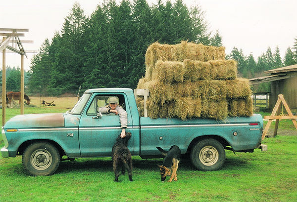 haytruck and dogs.jpg