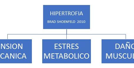 HIPERTROFIA Y DAÑO MUSCULAR