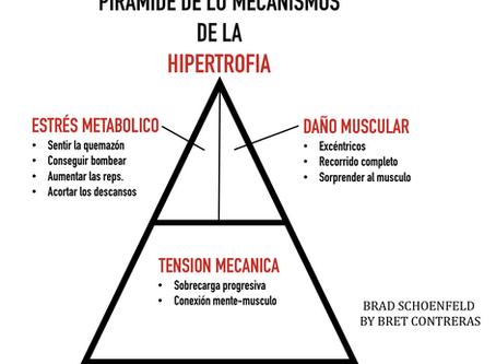 Pirámide de los mecanismos de la hipertrofia