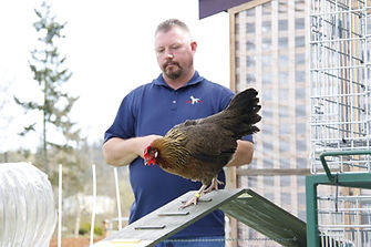 Terry Ryan chicken workshop