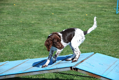 Legacy Custom Dog Training Workshop