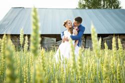 Līgavas un līgavaiņa foto labībā
