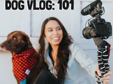 DOG VLOG: 101