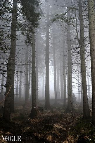 Sound of Silence II.jpg
