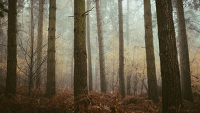 Kolekcja Angielska Jesień - wydruki do Waszych domów   English Autumn Collection - prints for you