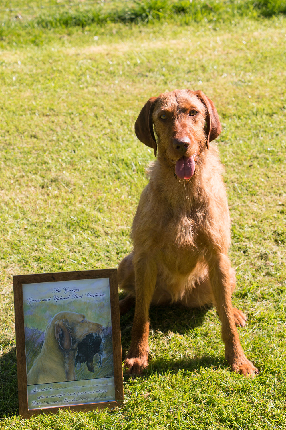 Tarka with her Gonegos challenge certificate!