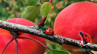 Depuis 1804,  neuf générations de la famille Monteux, travaille la terre pour la culture d'arbres fruitiers : abricots, pêches et kiwi .