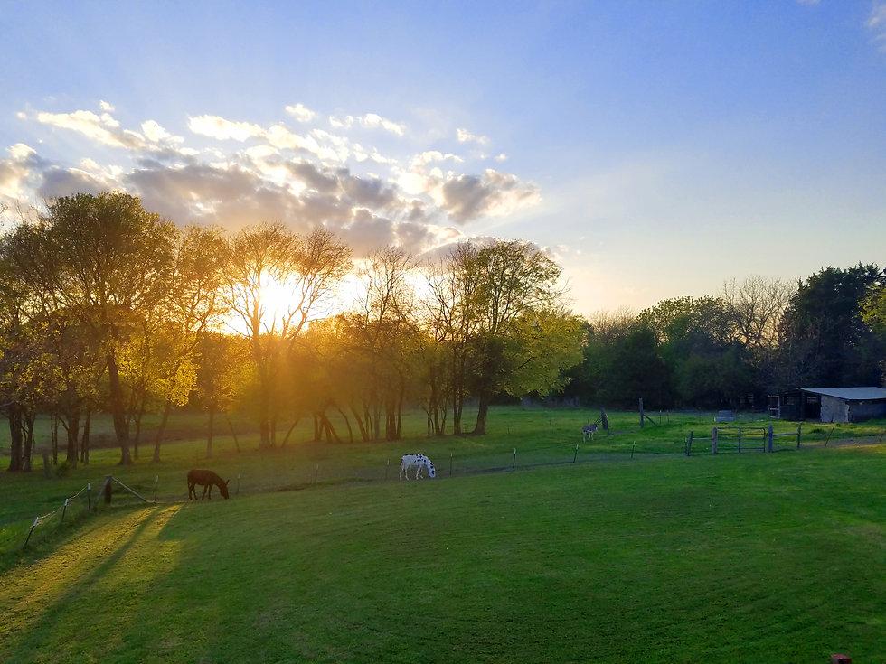 donkey sunset.jpg