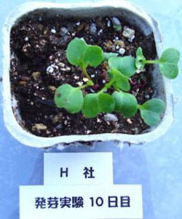 発芽H社Dsc01737200.jpg
