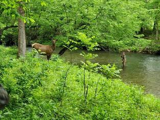 elk and fishing.jpg