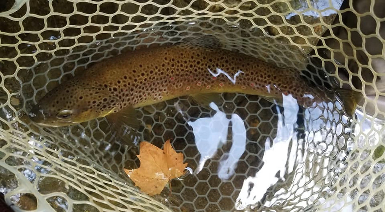 trout net brown.jpg