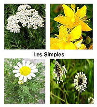 logo Les Simples.jpg