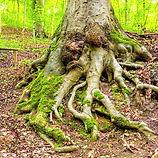 racine-arbre_edited.jpg