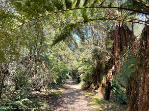 Step back in time at Fern Glade Reserve, Tasmania, Australia