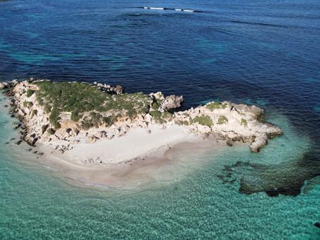 Swimming with Australian sea lions