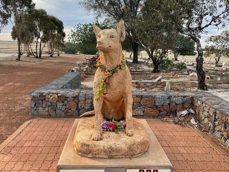 Remembering Man's Best Friend at the Corrigin Dog Cemetery, Western Australia