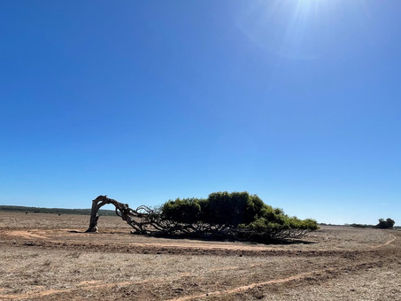 10 things to see and do around Greenough, Western Australia