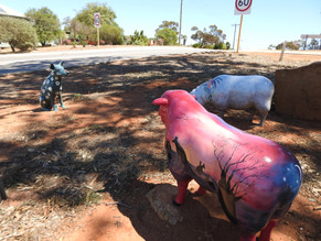 Ewe will enjoy Northampton, Western Australia