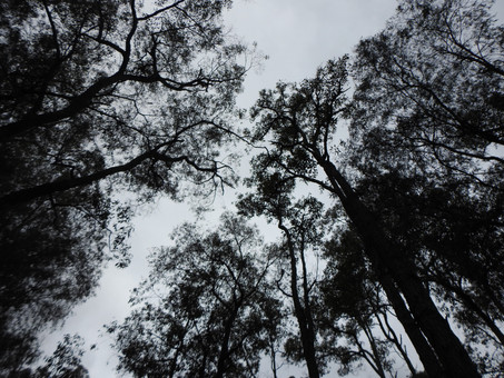 10 things to see and do in Wellington National Park