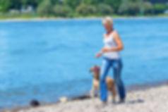 mature woman jogs with a labrador retrie