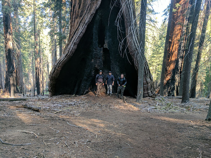 Hart Tree Trail 4 3 in a big tee.jpg