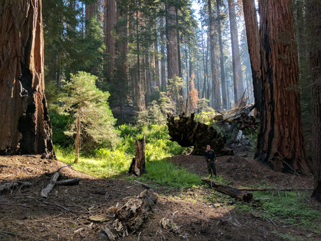 Hiking the Hart Tree Trail