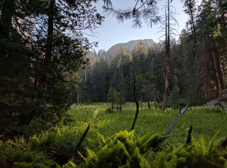 Hart Tree Trail