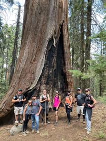 Group near Sequoia