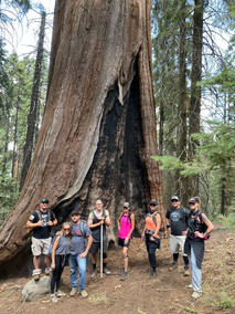 Group near Sequoia