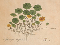 Botanical_IV