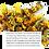Thumbnail: Marigold Petals & Lavender Shampoo