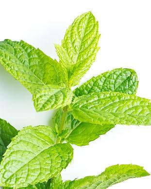 Peppermint-Essential-Oil-Mentha-piperita