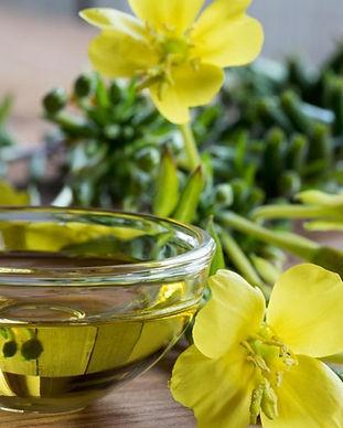 Evening-Primrose-Oil-Uses-Benefits-Dosag