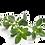 Thumbnail: Tea Tree & Lavender Shampoo