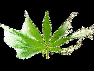CBD leaf poweder and oil.png