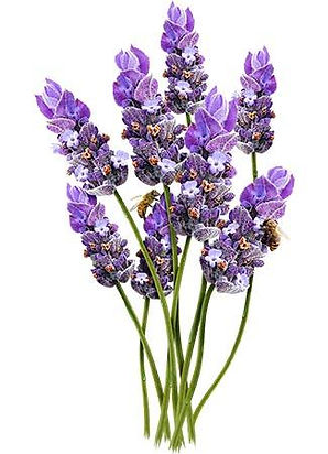 Lavender_Vera_7c253ddf-6177-4fbc-a743-7c