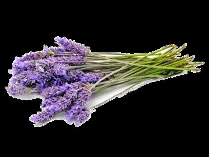 Lavender .png