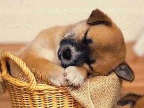 Del glaucoma y los ronquidos: síndrome de apnea del sueño
