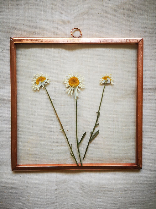Copper frame with Daisy