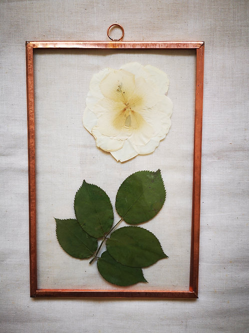 Copper frame with white rose