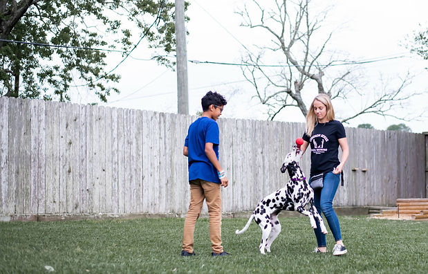 Young boy is assisting the trainer in training his dog  to take it.