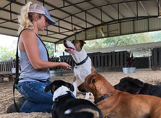Trainer is working with a group of dogs.