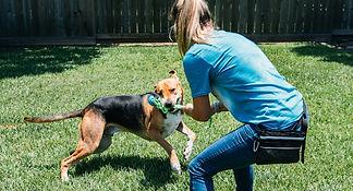 Trainer is rewarding dog with tug of war.