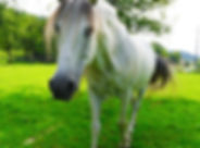horse-2830819_1920.jpg