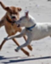 Dog Reactivity.jpg