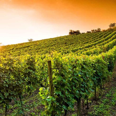 viticole drone